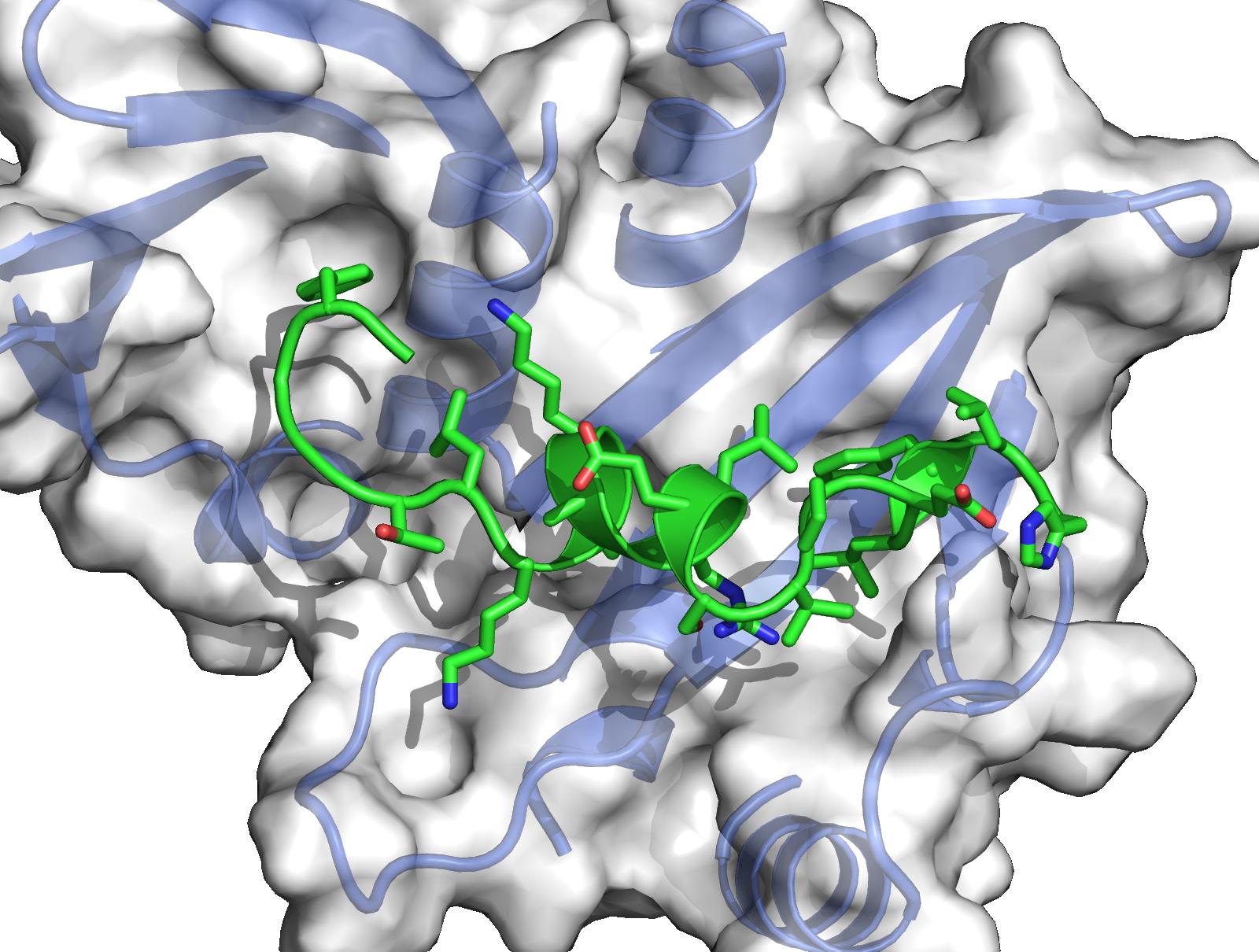 Budding-yeast Csm1-Dse3 complex