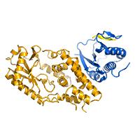 P. aeruginosa CdnD:HORMA2