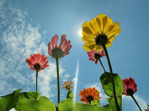 best-feb-ms-flowers_49344_600x450.jpg