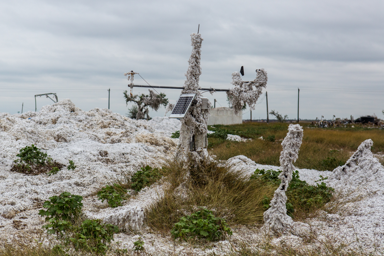 Cotton damaged from Hurricane Harvey blankets a weather station in Bayside, Texas. Nov. 9, 2017.