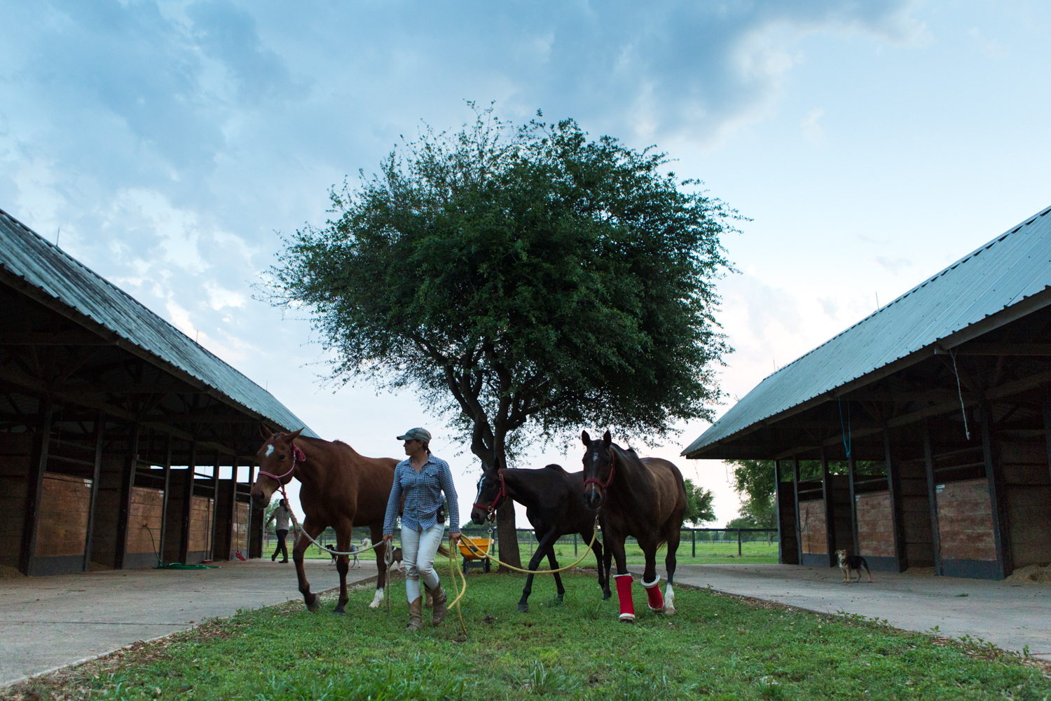 Hudspeth leads the horses out to the pasture at the end of the day. She works with the horses from sunrise to sunset six days a week.