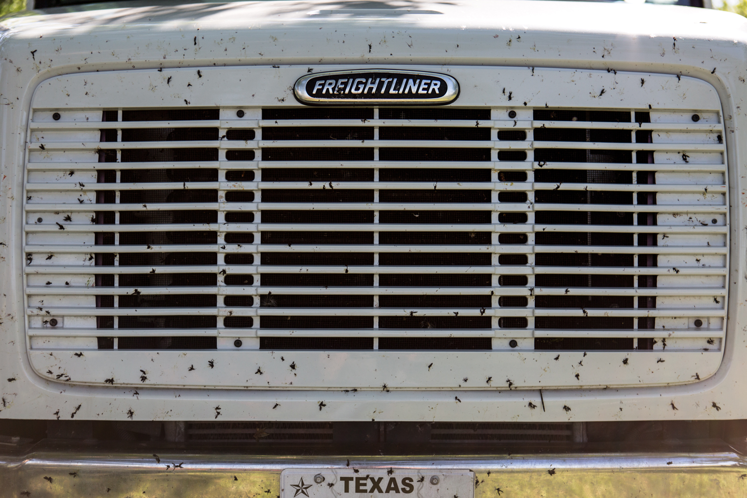 The grill of Hudspeth's heavy duty truck covered in love bugs during the spring polo season. She is constantly on the road both during and in between polo seasons.