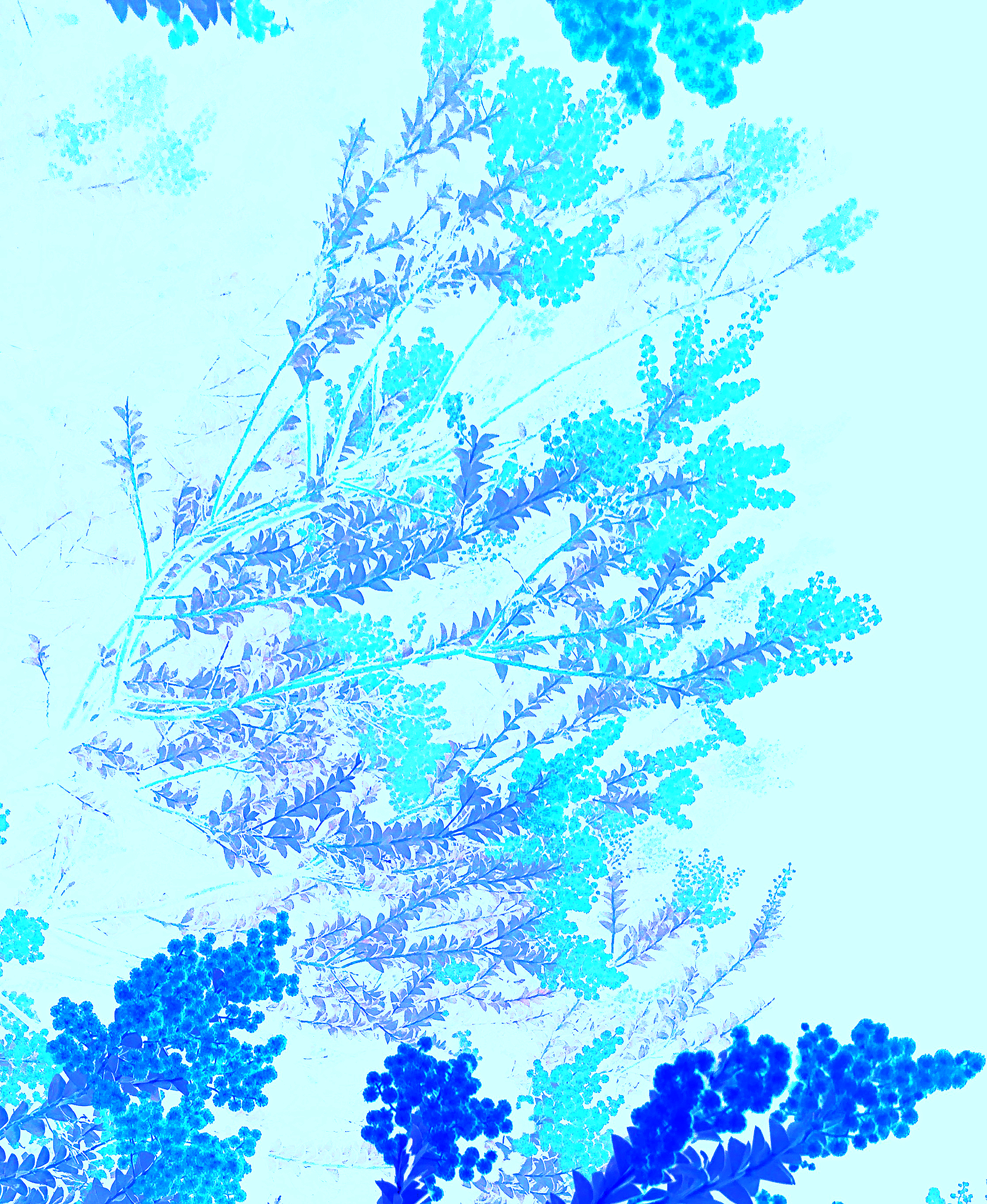 blueATNIGHT-PRESERVEDETAILS-P-IMG_5561web.jpg