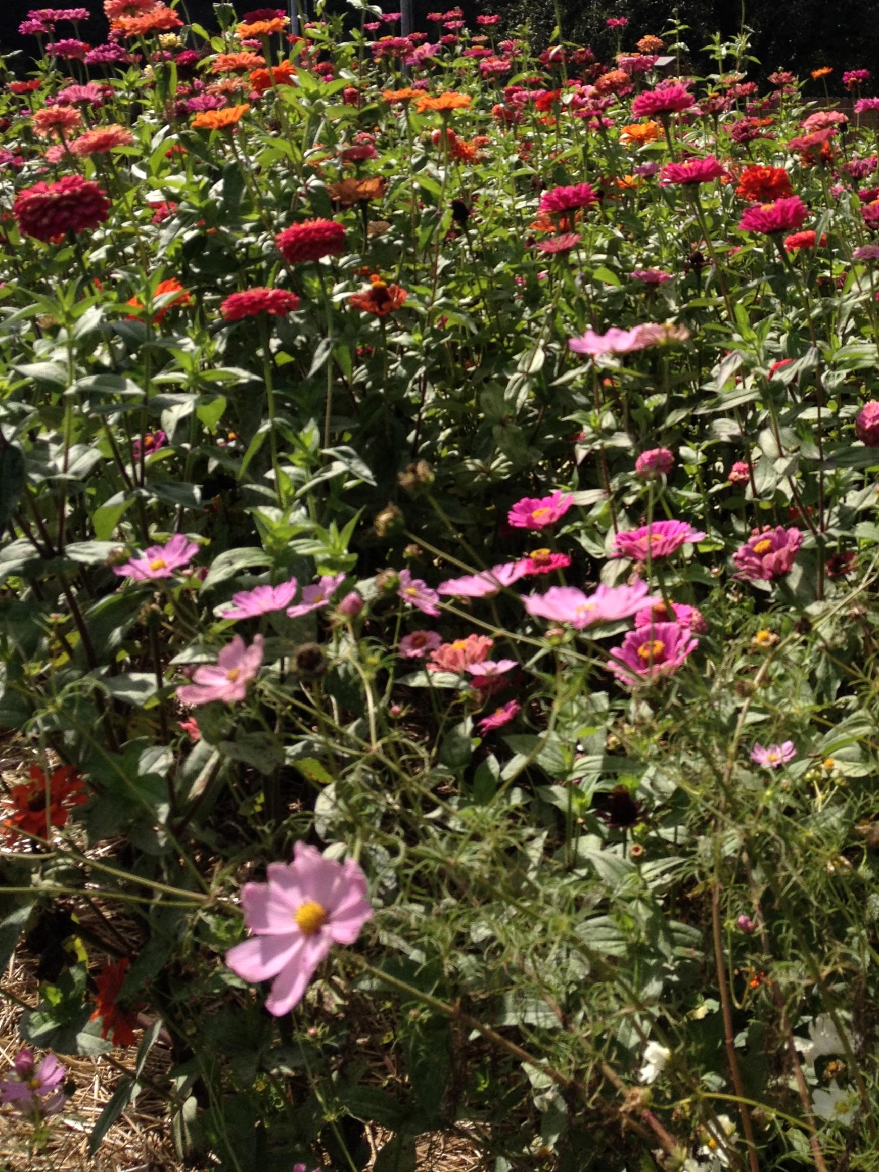 North Carolina Flower Farm.jpg