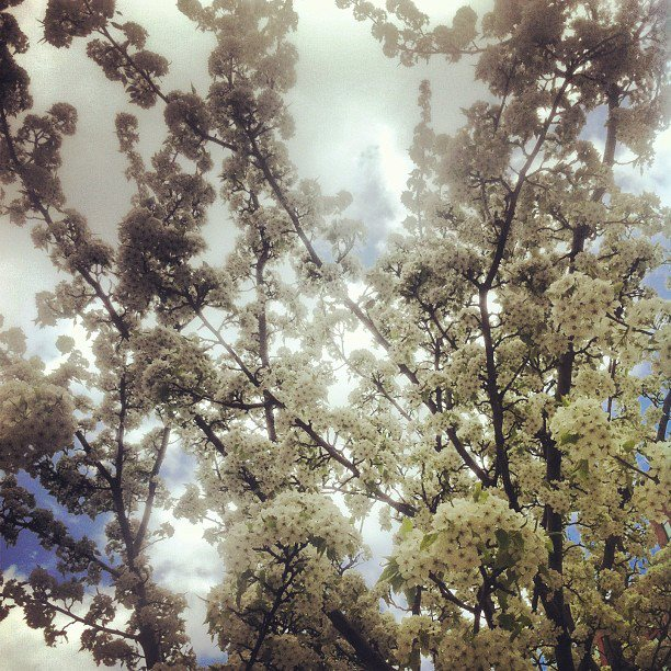 Flowering trees are only in bloom for a short time...