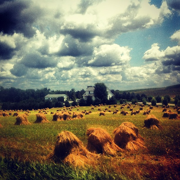 ... and the Amish farmers prepare for autumn harvests...