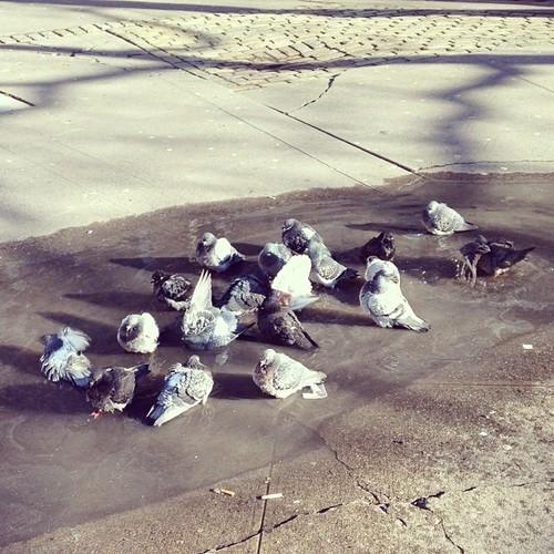 Pigeon Spa, NYC. By Kari Hansbarger