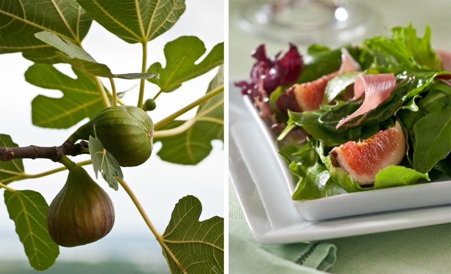 fig tree fig salad.jpg