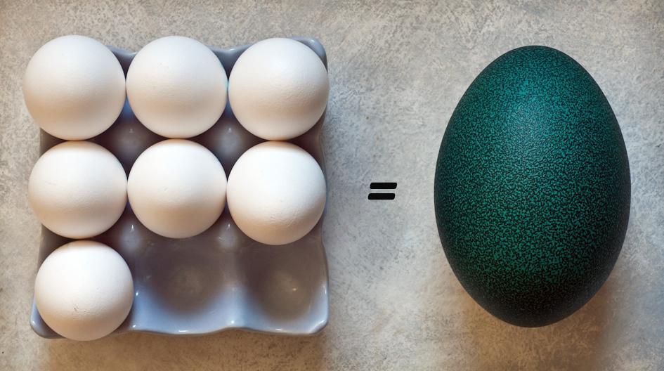 7 extra large chicken eggs = 1 emu egg