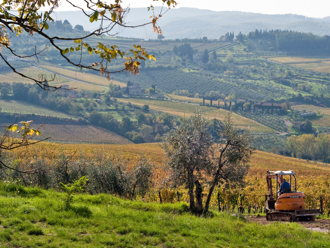 Morning chores in the vineyards, Panzano in Chianti.