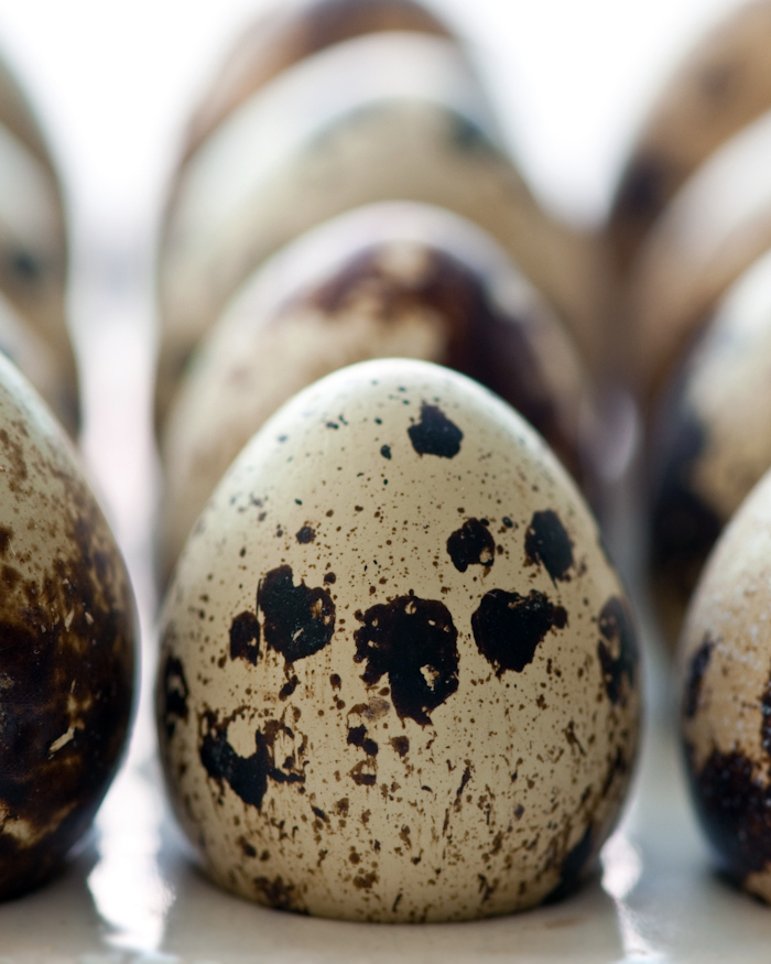 Quail Eggs, almost too adorable to eat.