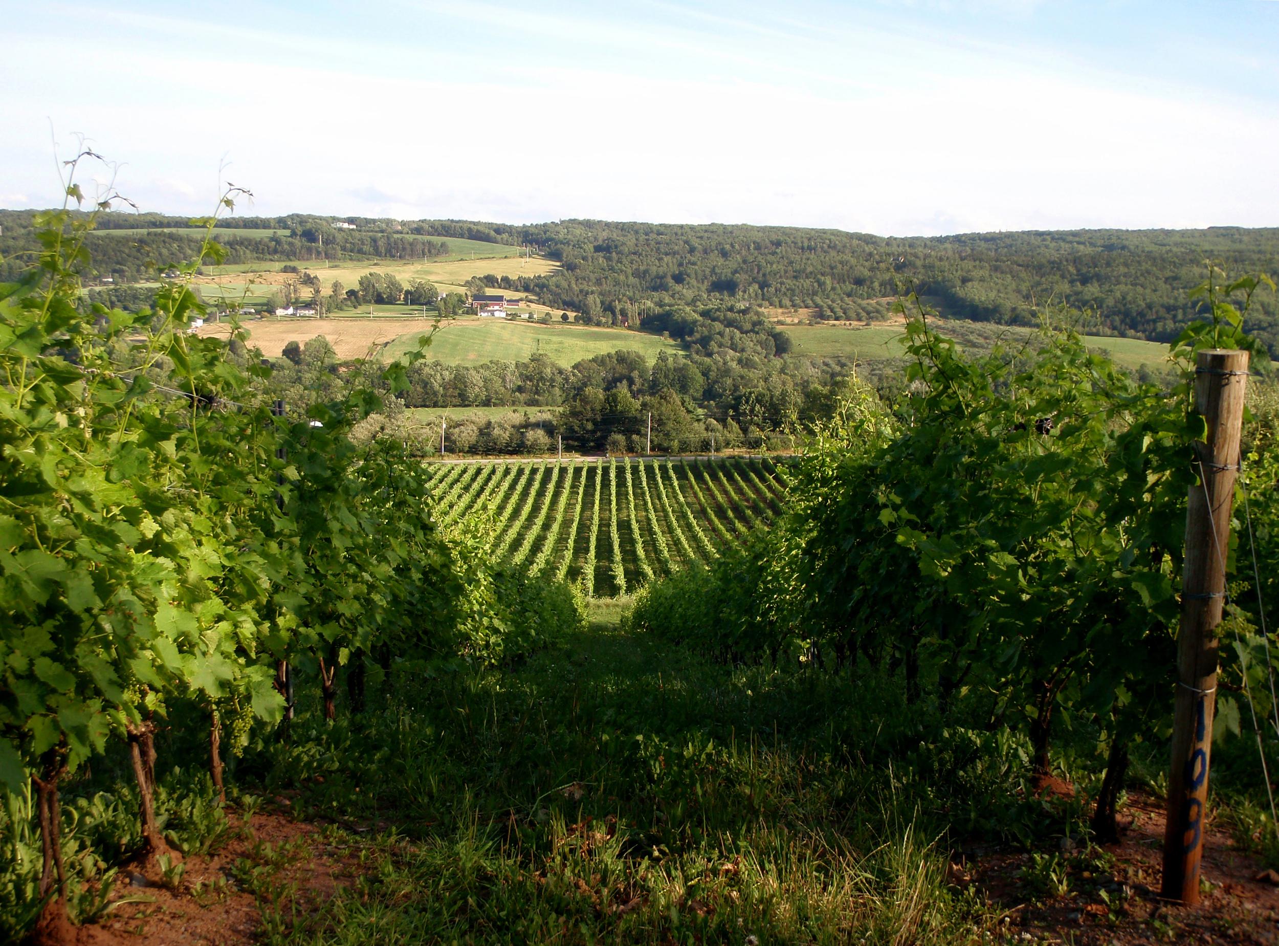 Gaspereau Vineyards.
