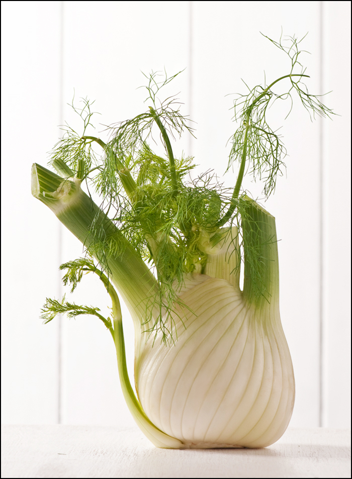 fresh fennel bulb
