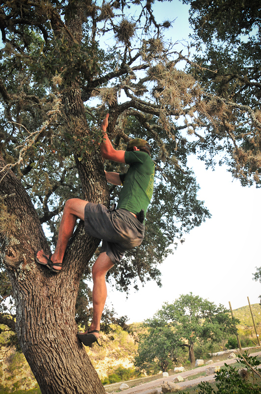 Scott climbs the live oak to retrieve his arrows for the archery challenge - Photo by SeeFar Photographic