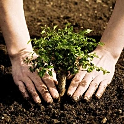 Can-Reforestation-Save-the-Planet_large.jpg