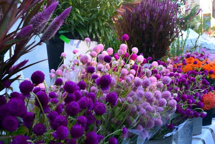 usqfloweres.jpg