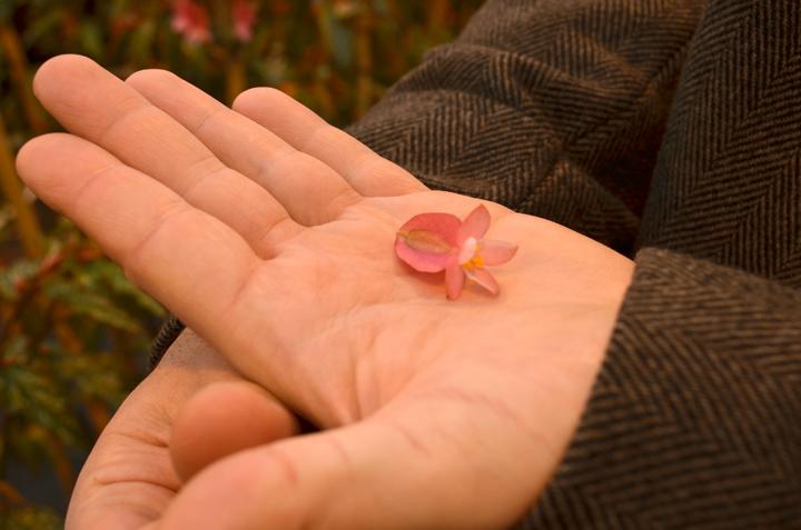 Koppert Cress Apple Blossom