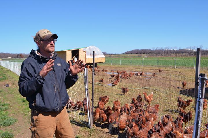 "Chris, Garden of Eve's Farmer gave me a tour of their ""Egg mobiles"""