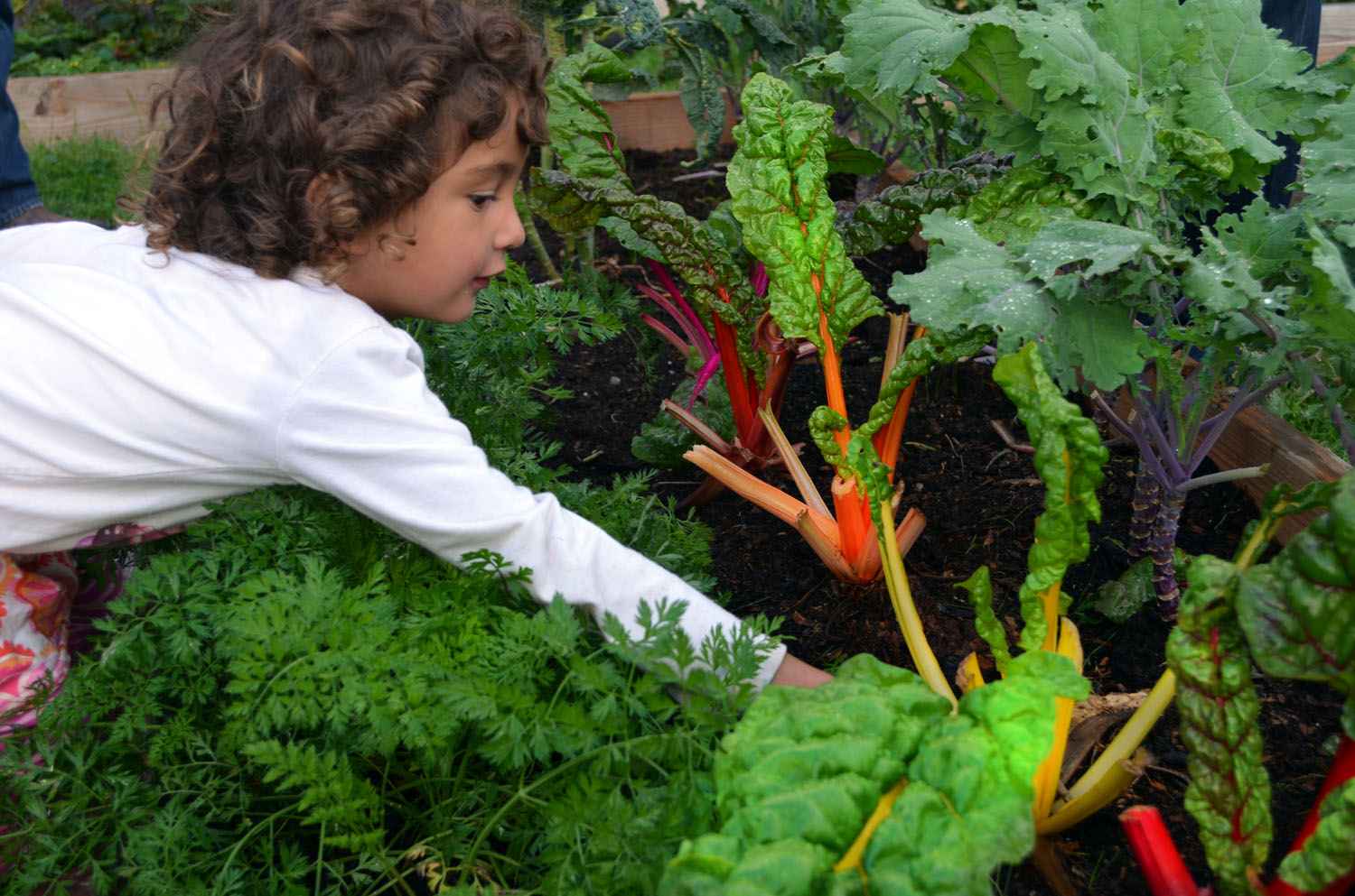 edible school garden