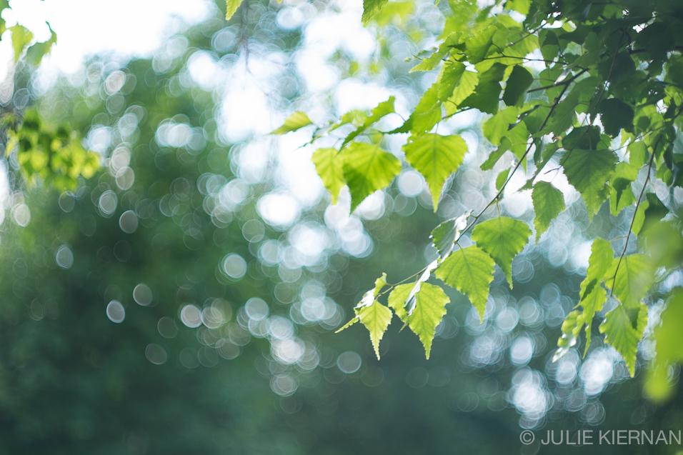 Foliage in Bokeh