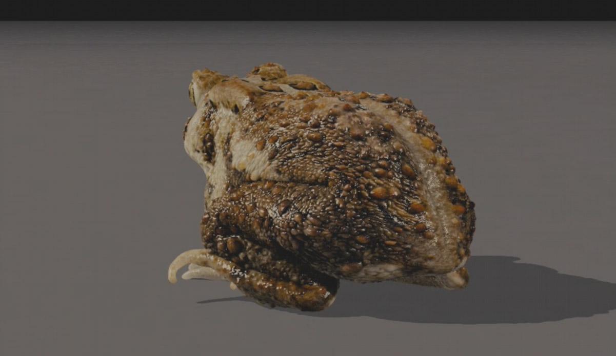 toad02.jpg