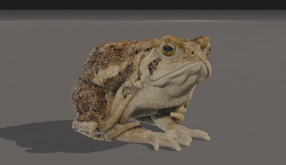 toad01.jpg