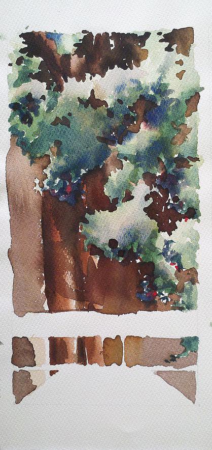 conifers in Hawaii.jpg