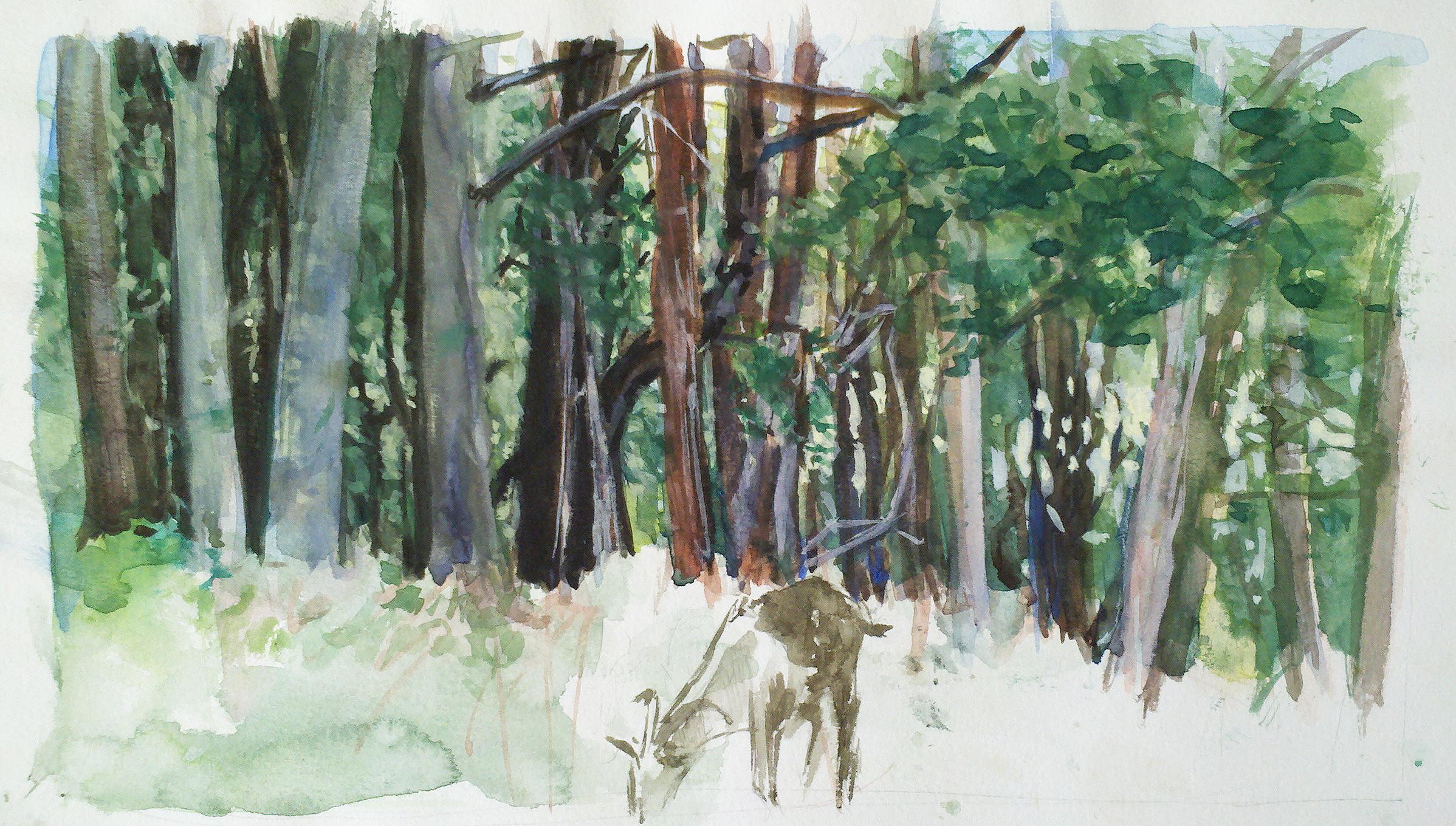 goat in the woods.jpg