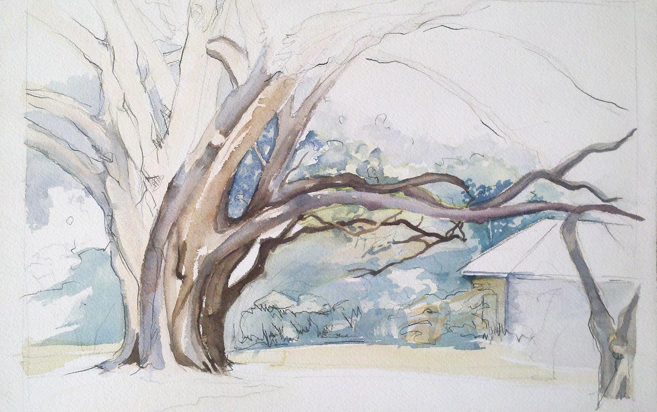 old oak in boone unfinished.jpg