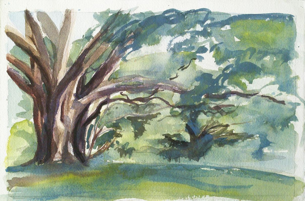 old oak in Boone.jpg