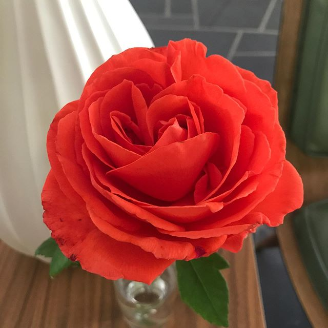 It's been so fun to see all the new-to-us landscaping reveal itself this spring. Apparently, we have the most gorgeous color of roses I've ever seen.