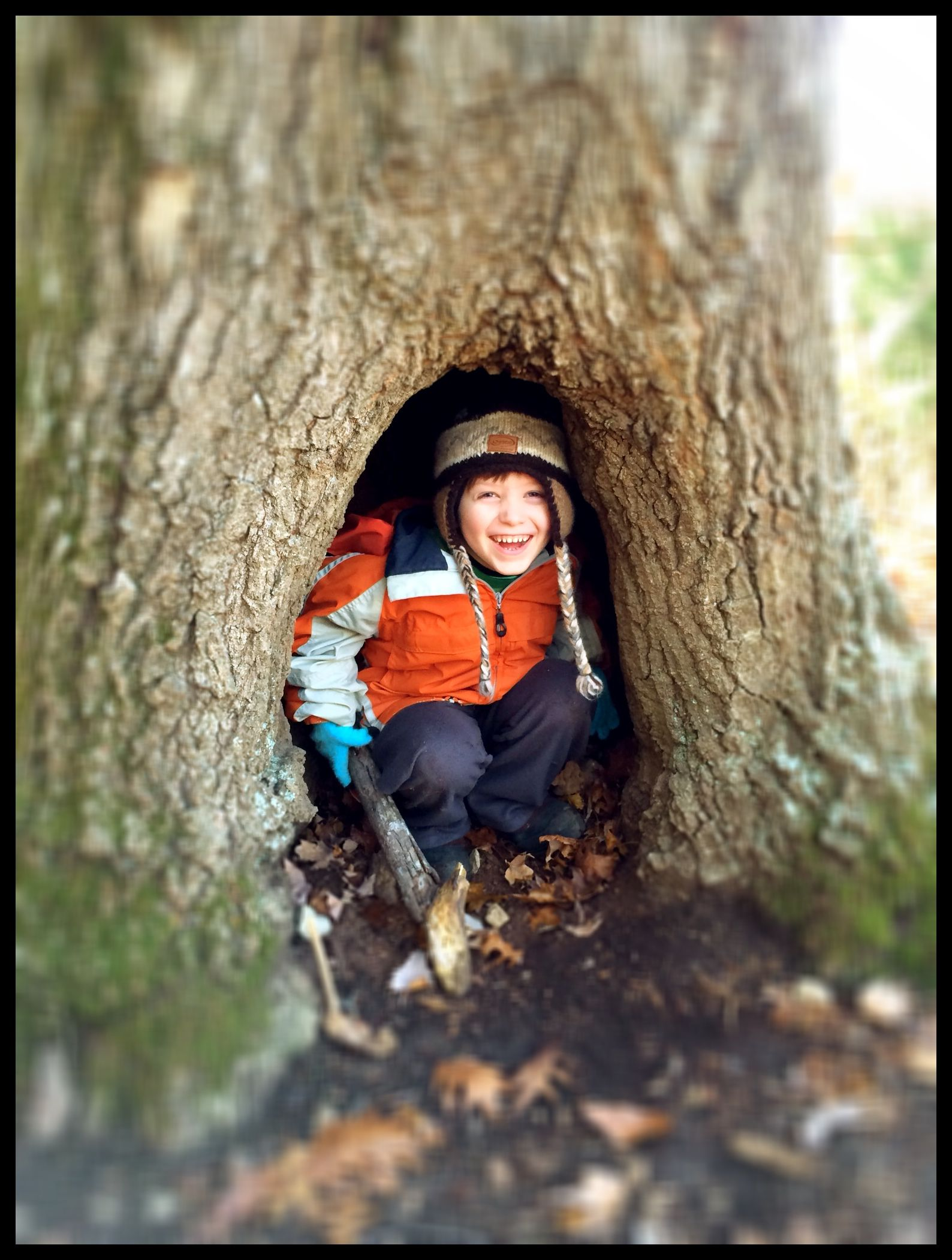 Dominic in a tree.jpg