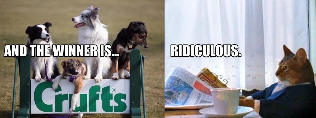 crufts-cat.jpg