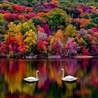 homeopothy-geese.jpg