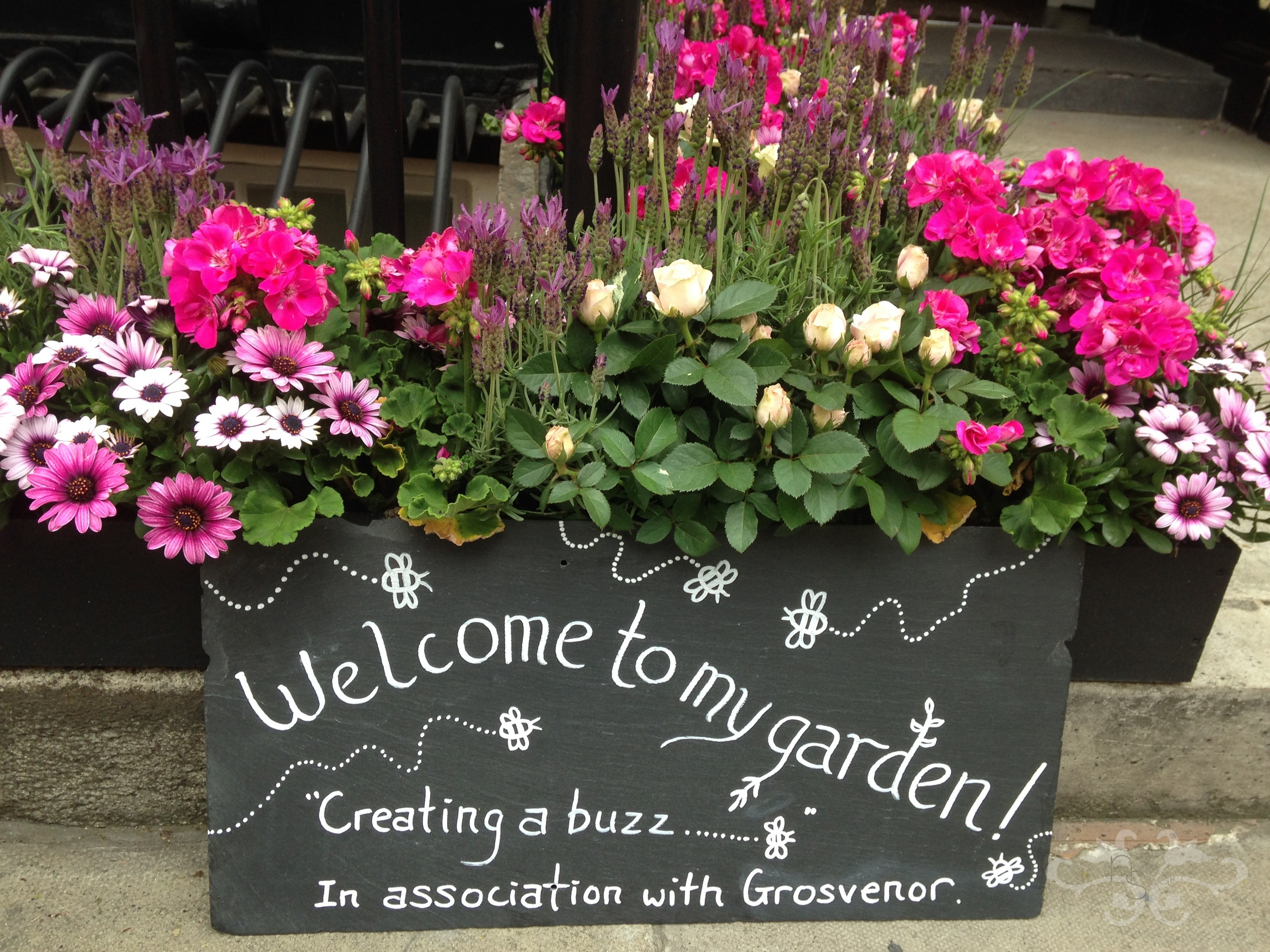 "Introducing a new service for our Belgravia-and-beyond clients :   Window boxes, hanging baskets, patio containers and ""living walls"" all composed of bee-friendly plants and flowers..."