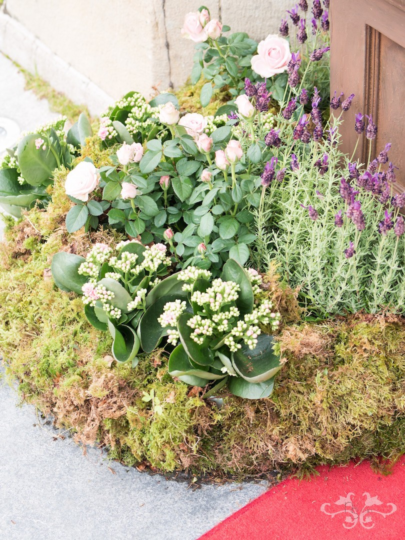 Rose, Lavender and Kalanchoe plants in a bed of moss enhance the base of the Urn.