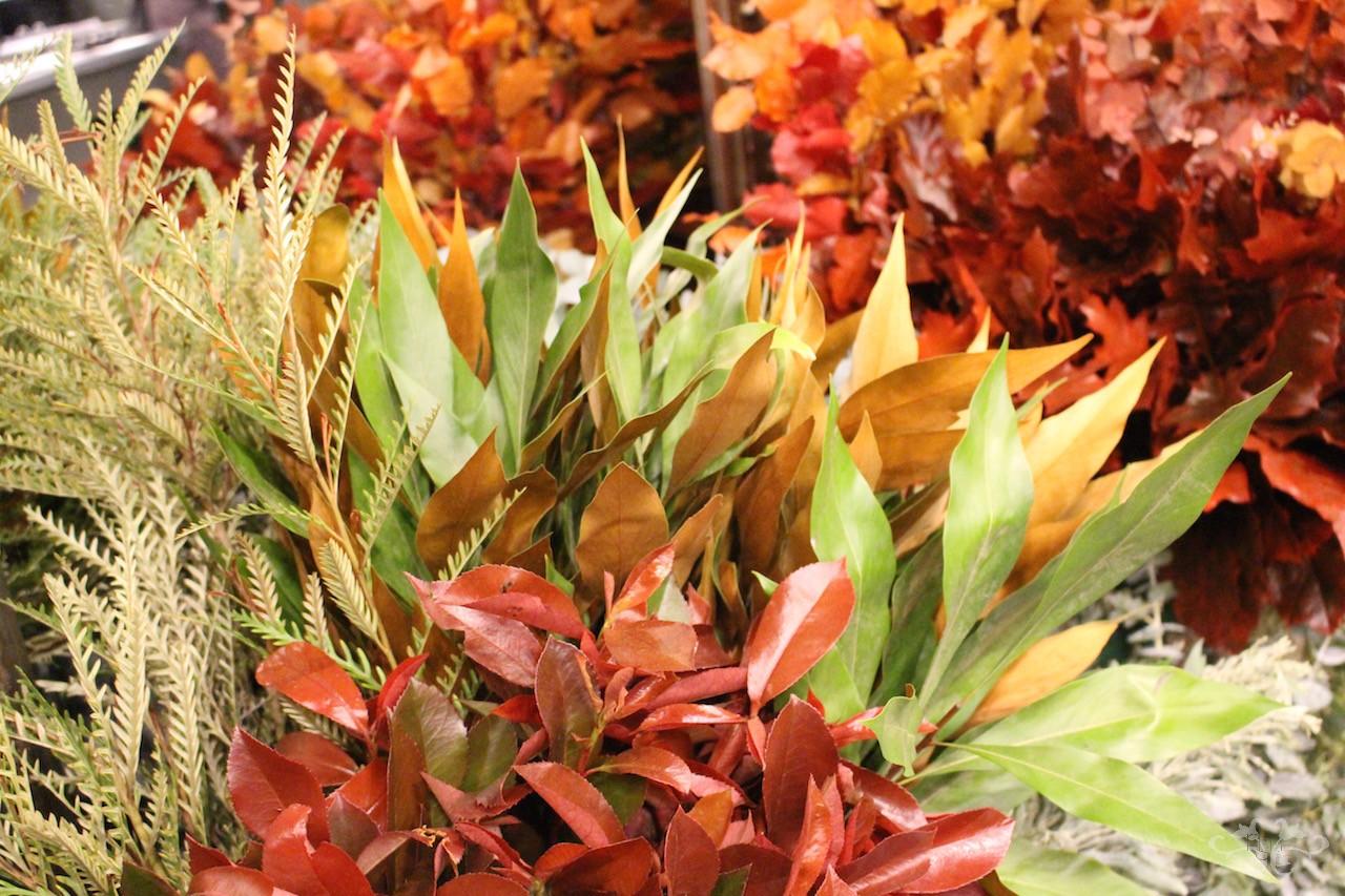 autumn foliage by Neill Strain.jpg