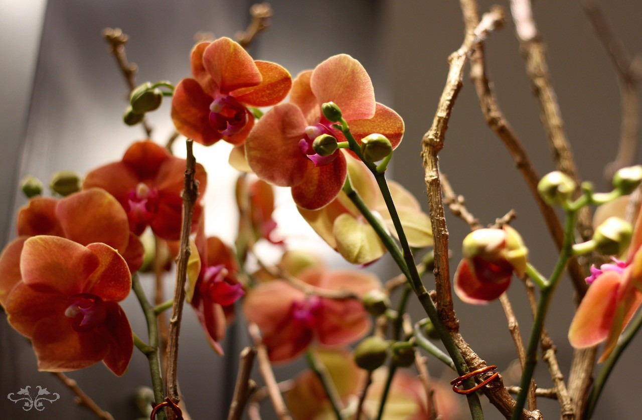 Stunning Orchid planters by Neill Strain Floral Couture