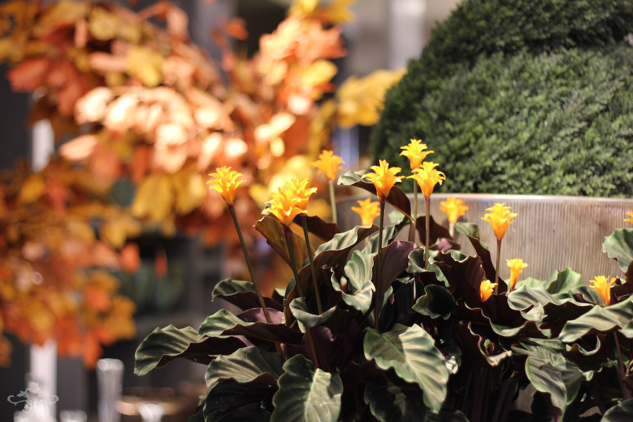 Autumn plant inspirations for styling interiors