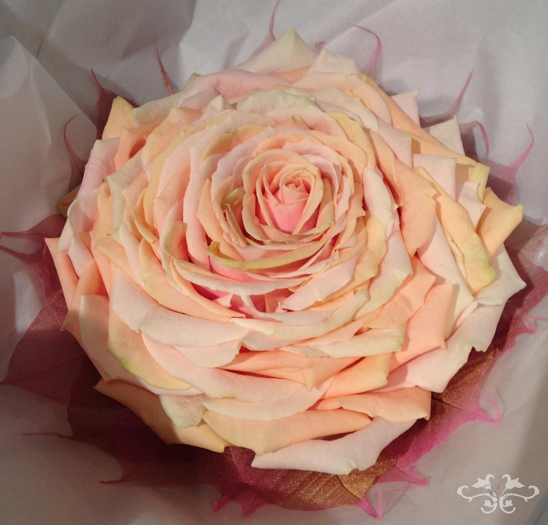 Neill Strain Composite Glamelia Rose (2).jpg