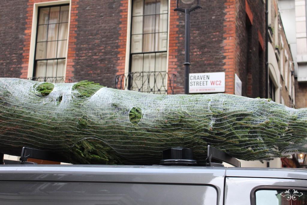 Neill Strain Christmas tree deliveries.jpg