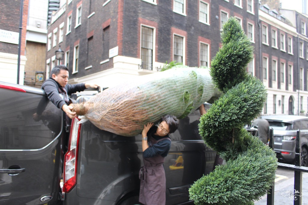 Neill Strain Christmas tree deliveries London.jpg