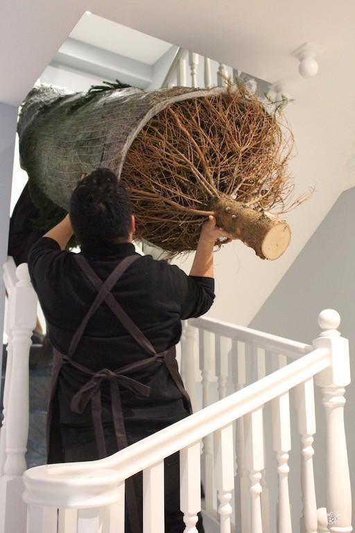 Neill Strain Christmas Tree deliveries Mayfair.jpg