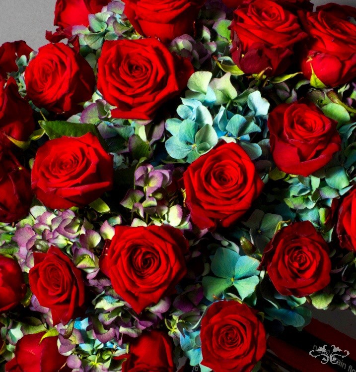 Haute Couture luxury bouquets with stunning Red Naomi red Roses on a bed of pastel Hydrangea for Valentine's Day.