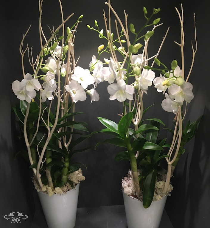 Dendrobium Orchids decorated by Neill Strain