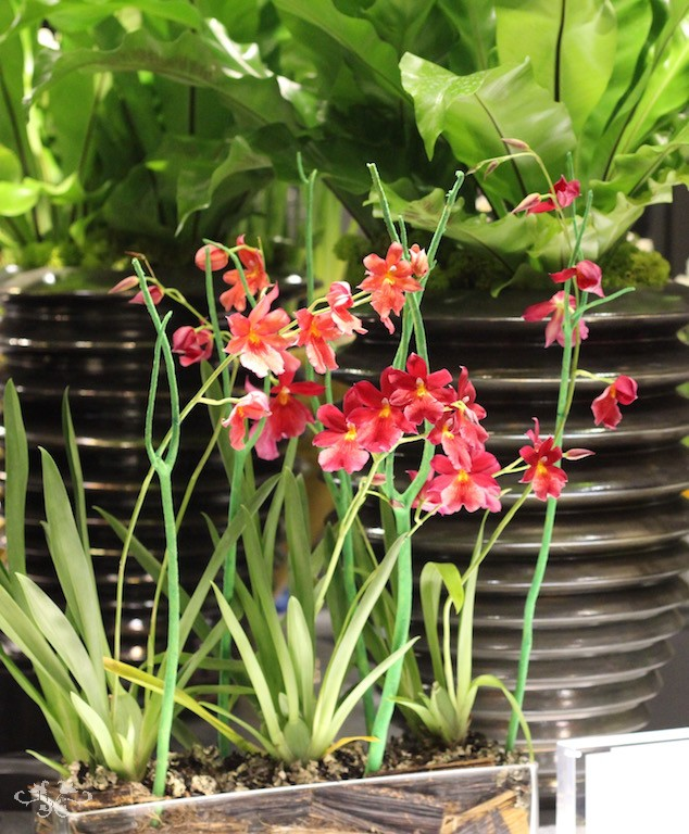 Cambria Orchids designed by Neill Strain