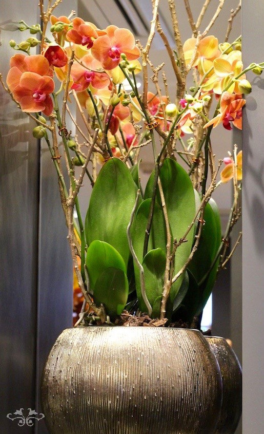 Phalaenopsis Orchids exist in many colours and are quite striking designed in our hand-made containers.