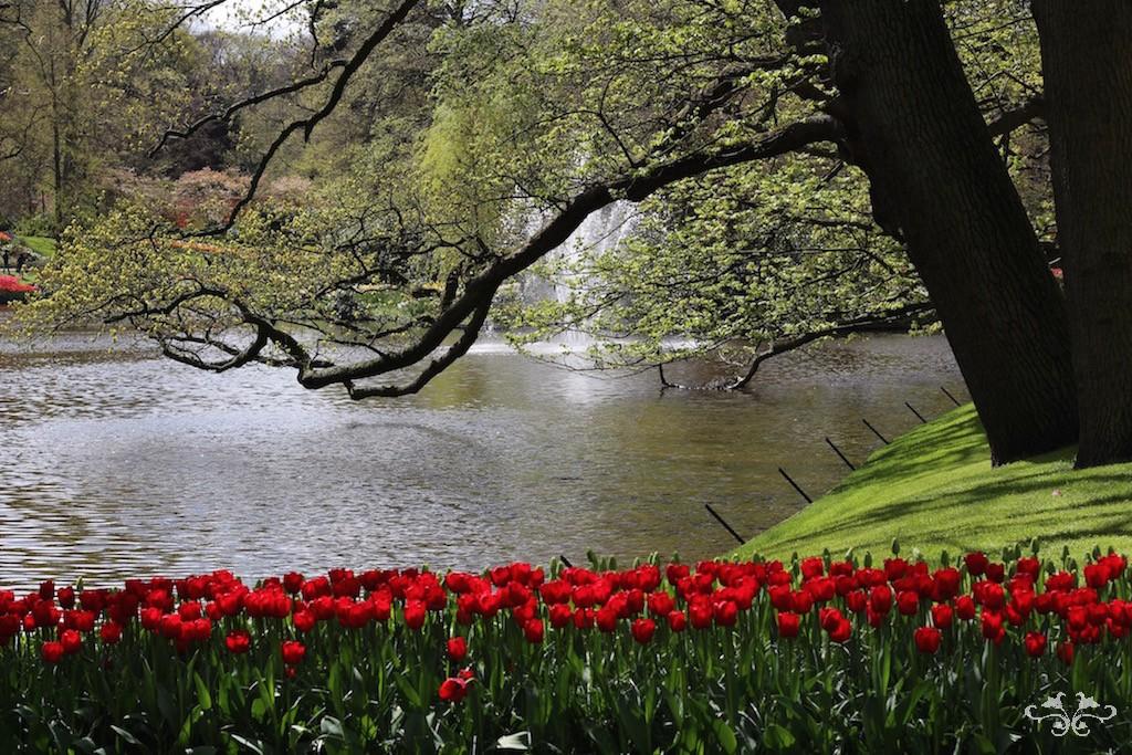 Neill Strain red tulips.jpg