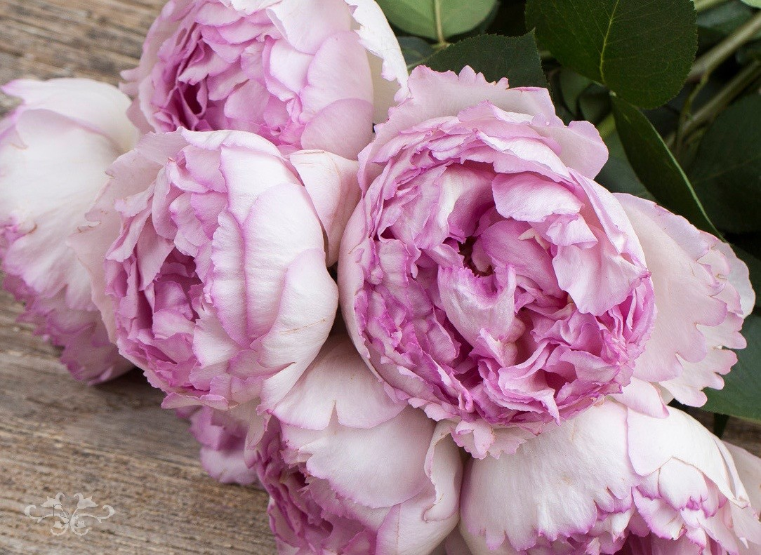 PFC-MJP-Yves-Piaget-Pink.jpg