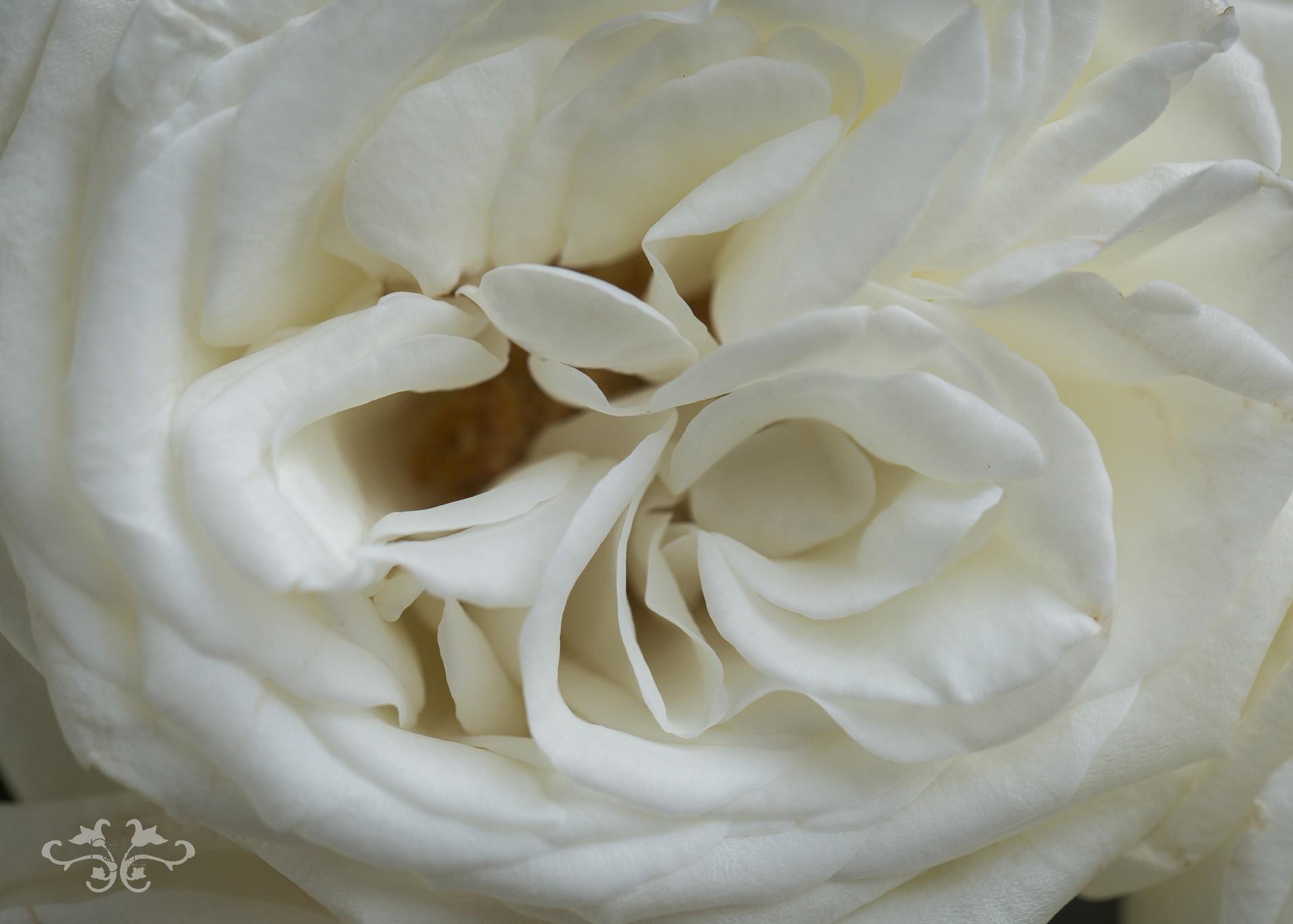 White_V7A1988.jpg
